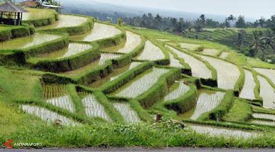 Sistem Pertanian Organik Tekhnologi Ramah lingkungan