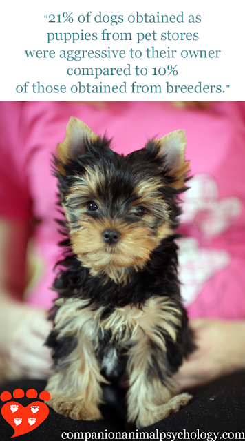 Cute Yorkie puppy - but puppies from pet stores have more behaviour problems