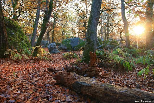 Fin de journée automnale au Bas Cuvier en Forêt de Fontainebleau