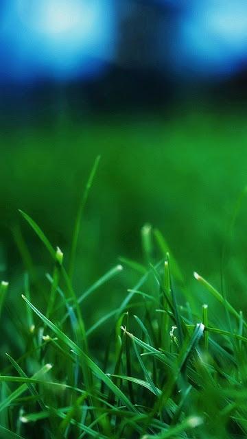 Hình nền 3D thiên nhiên đẹp cho iPhone 7 Plus