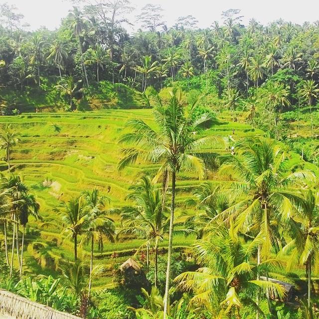 hidup-nyaman-awalu-di-pedesaan-dan-bikin-kaya