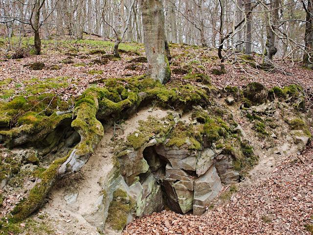 Urwaldstieg Edersee