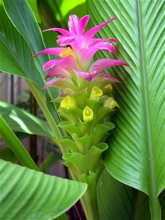 A MAGYAROK TUDÁSA  Egzotikus - trópusi gyümölcsök - fűszernövények ab535920ad