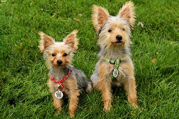 pet shops  Como Selecionar uma Coleira para seu Cão