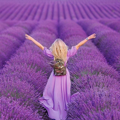 https://www.pinterest.co.uk/justandyr/lavender-fields/