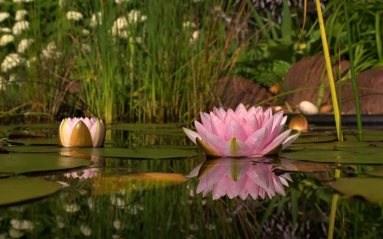 Carpe diem haiku kai carpe diem theme week 3 magnolia blossoms wednesday april 20 2016 izmirmasajfo Choice Image