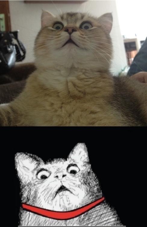 Scared Cat Meme | Funny Cat Pictures