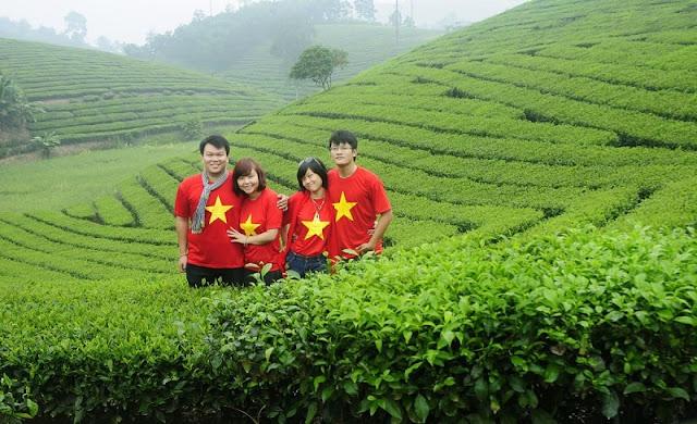 Shan Tuyet tea in Ha Giang 2