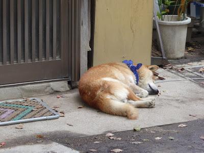 三島神社 社務所 犬