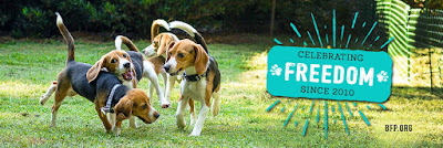 Beagle Freedom Project advocates for and rescues research animals.