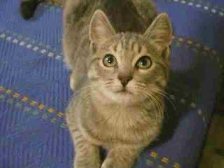 sapne mein billi dekhna सपने में बिल्ली देखना