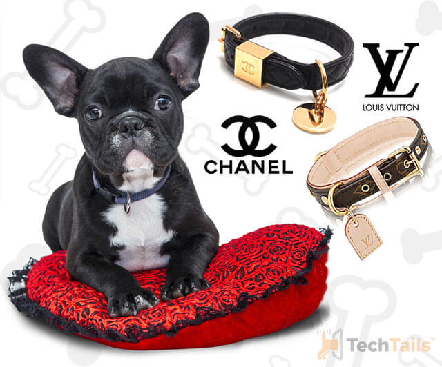 designer-dog-collars