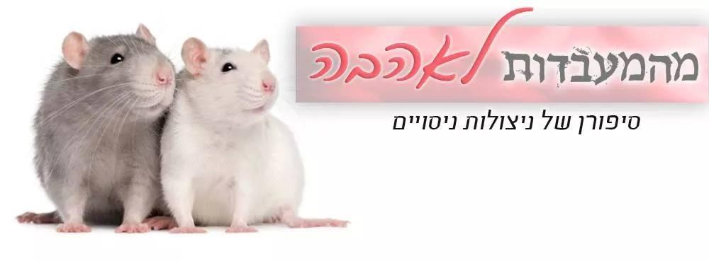 רק החוצה חולדות מחמד בישראל: המדריך לגידול חולדות מחמד OK-82