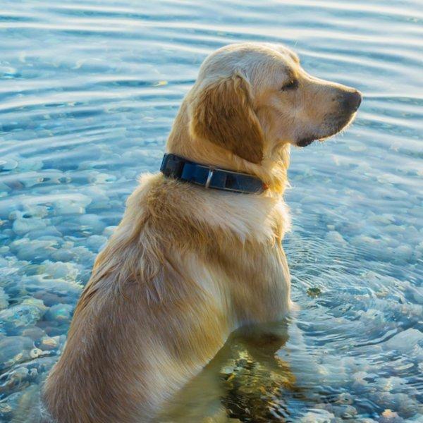 Μήπως ο σκύλος μου έπαθε θερμοπληξία; Πώς μπορώ να τον προστατέψω;