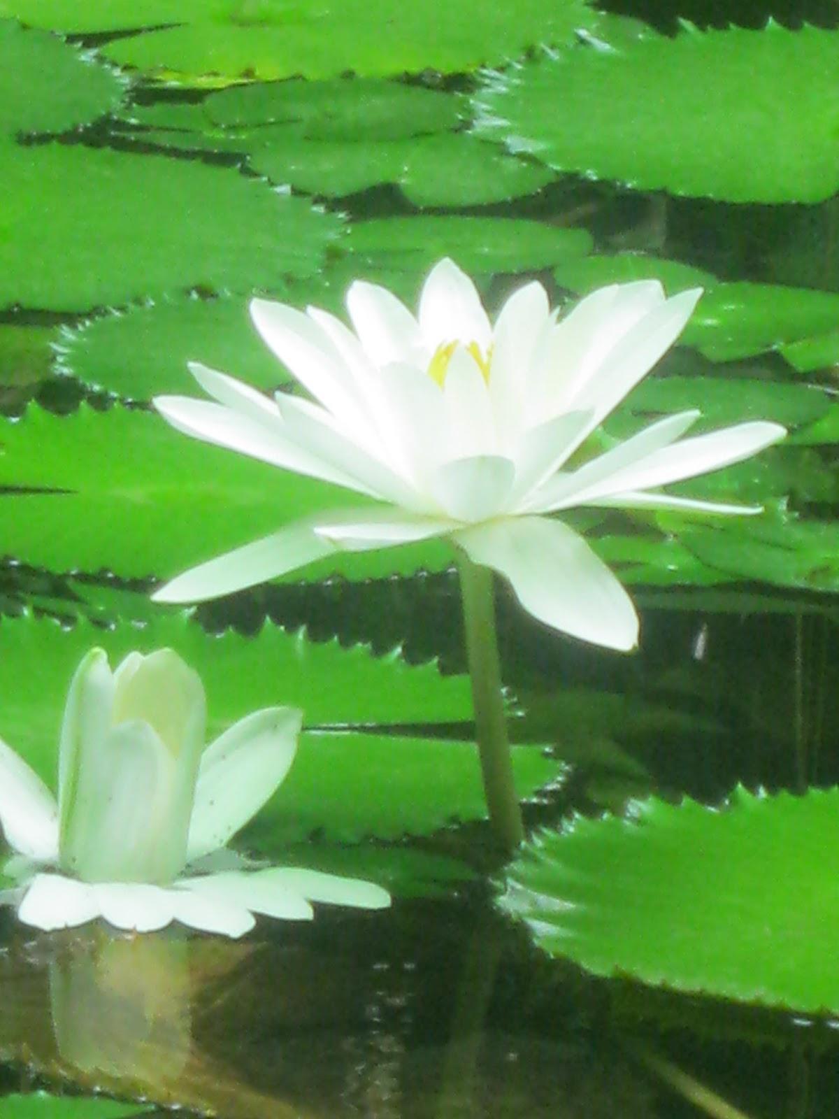 Evolucion de las plantas faner gamas plantas con flor for Plantas para veredas con flores