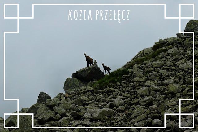 http://www.rudazwyboru.pl/2018/06/kozia-przeecz-opis-szlaku.html