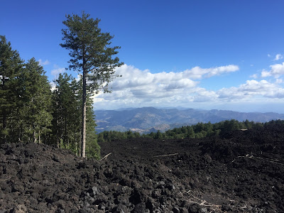 Stands of forest give way to lava flows that laid waste to all that was there.