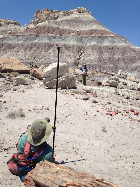 Research at Petrified Forest provides unique insight into extinction dynamics in late Triassic