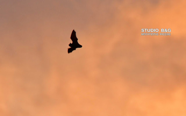 Η φωτογραφία της ημέρας: Η νυχτερίδα
