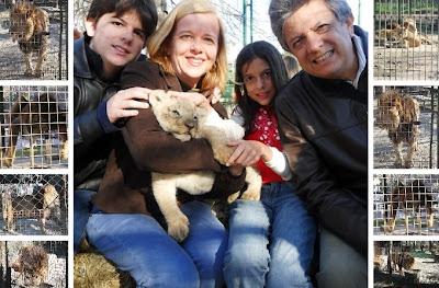 conhecendo a América Latina; Buenos Aires; Zôo Lujan; leão; filhote de leão