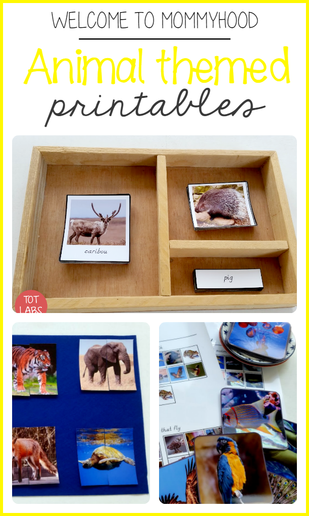 Kids Activities by Welcome to Mommyhood:Montessori Animal themed learning activities for preschool #montessori, #preschoolactivities, #montessoriactivities, #animalthemeactivities