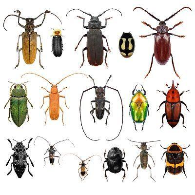 Muitos insetos são considerados danosos porque transmitem doenças, danificam construções ou destroem colheitas. No entanto, todos ocupam funções fundamentais para o equilíbrio ambiental. Em todo o mundo, profissionais se preocupam com várias formas de lutar contra os insetos que nos são prejudiciais. Quase sempre, isso é feito com o uso de inseticidas, mas, cada vez mais, busca-se métodos de controle biológico.