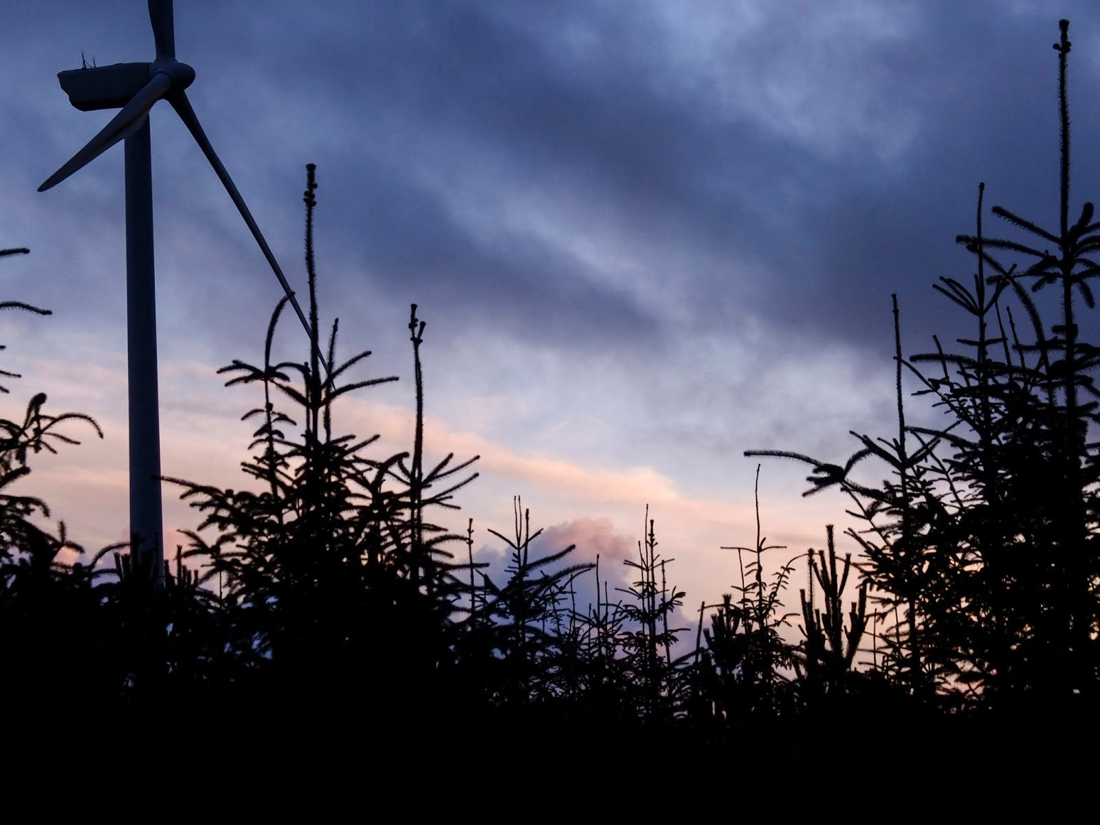 Conifer tree tops and a windmill with sunset clouds behind.