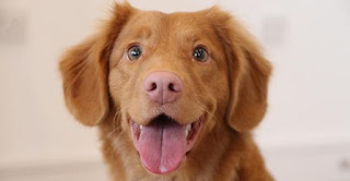 Νέα έρευνα δείχνει ότι ο σκύλος σου ξέρει πότε δεν είσαι καλά και θέλει να σε βοηθήσει