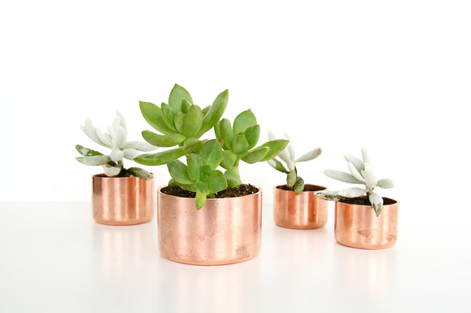 Mini Gold Plant : Diy mini copper planters poppytalk