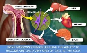 terapi stemcell dengan cellmaxx, cara stem cell bekerja, apa itu stem cell, apa itu cellmaxx, cellmaxx merangsang stem cell, terapi kanker dengan cellmaxx, terpaai hamil dengan cellmaxx,