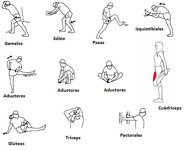Estiramientos para todos los grupos musculares
