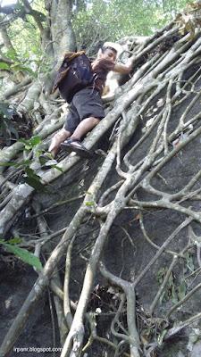 Gunung Munara Dinding Akar di Puncak 1
