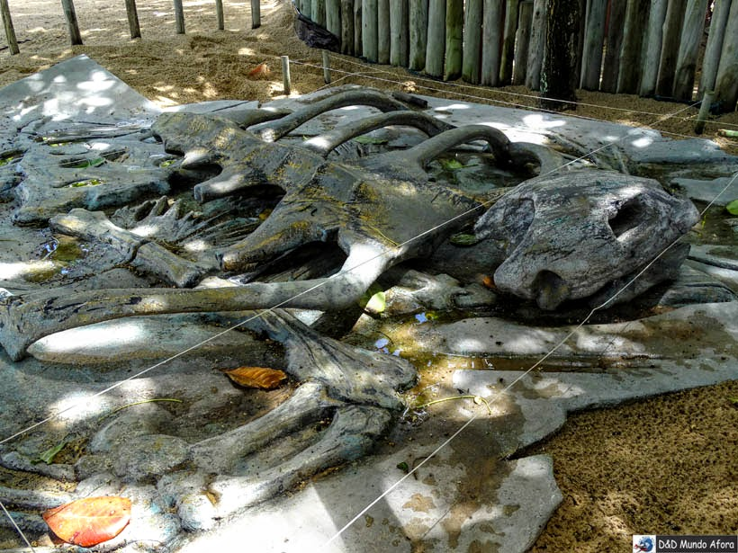 Tartaruga-couro Projeto Tamar - Praia do Forte (Bahia)