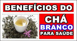 Benefícios do Chá Branco para saúde e Contraindicações