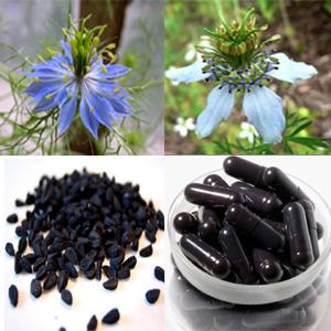 Herbal-Habatussauda-Alami-untuk-Kesehatan-Tubuh.jpg