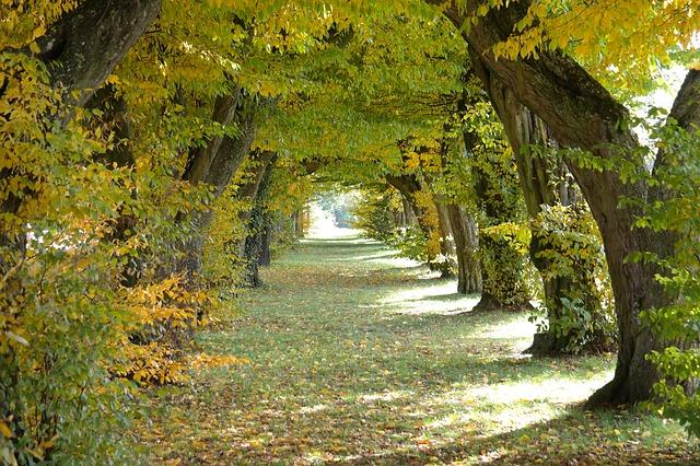 ảnh con đường mùa thu đẹp
