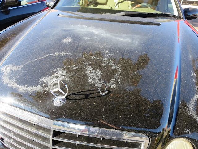 Hood looks horrible due to sun damage and peeling--before repairs at Almost Everything Auto Body