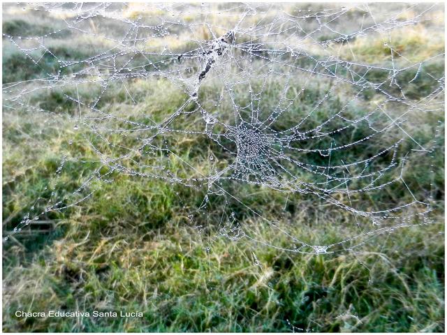 Las gotitas del rocío adornan las telas de araña- Chacra Educativa Santa Lucía