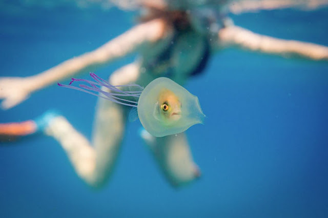fish-trapped-inside-jellyfish-3.jpg