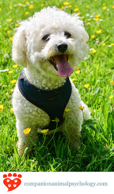 Dog training methods and side effects