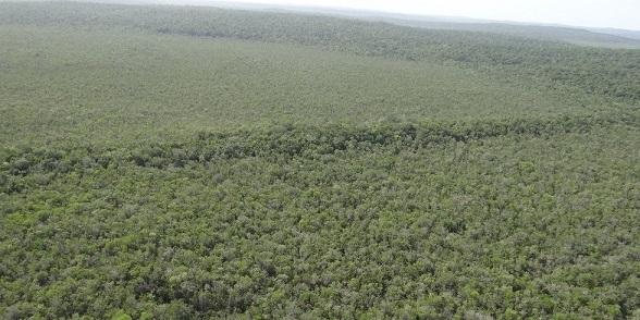 Un réseau routier maya découvert dans la jungle du Guatemala
