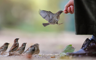 birds-sparrows-hand-food-man-wallpaper-2560x1600