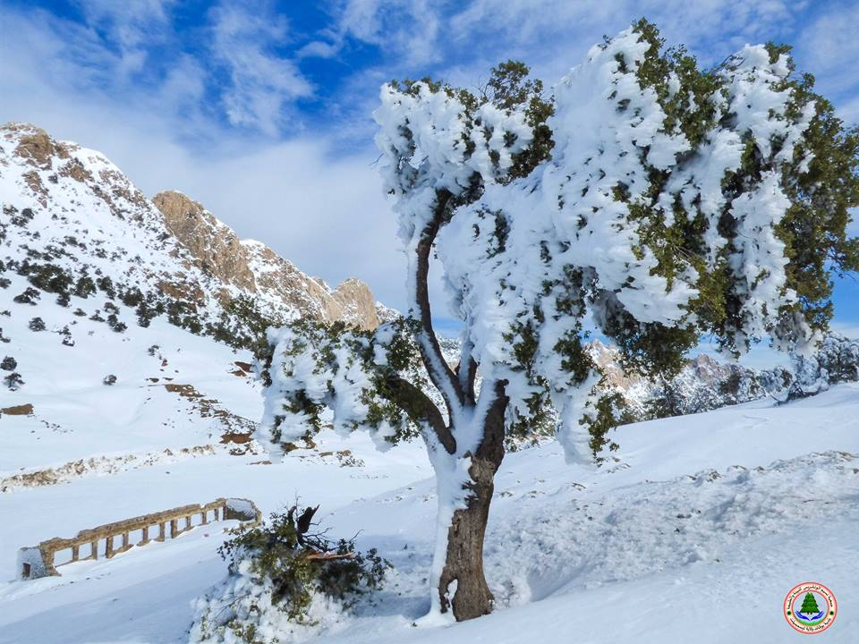 cc0bd61aa7f1d الثلوج تكسو جبال و قرى الونشريس