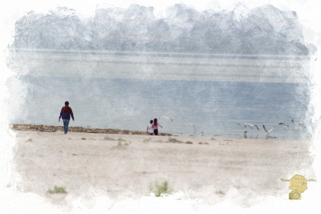 Chasing Seagulls At The Salton Sea In Digital Watercolor