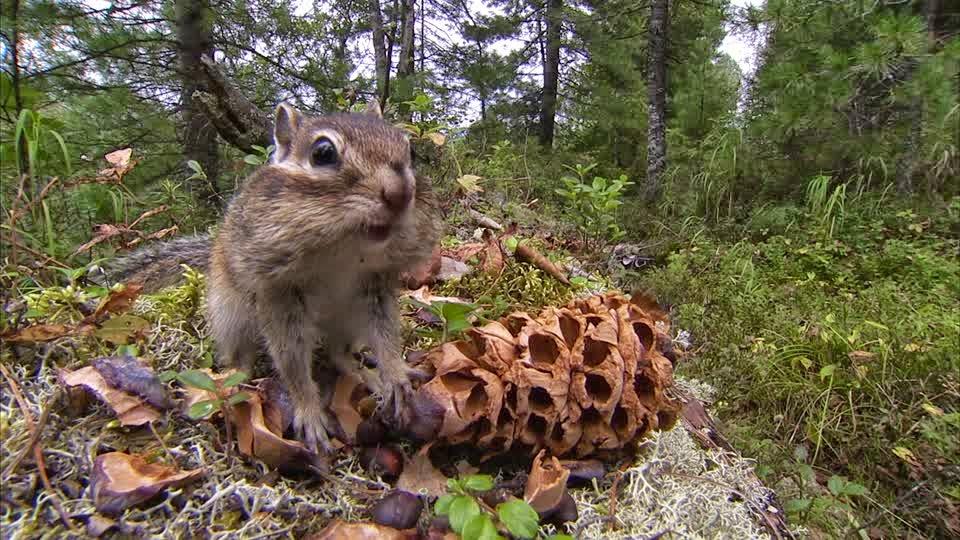 slatka azijska vjeverica ruževi za usne