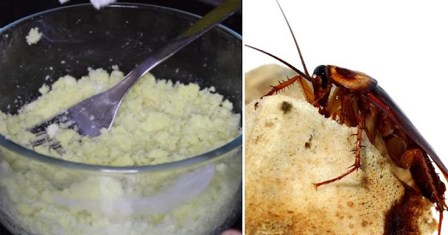 GET RID OF COCKROACHES WITH THIS ROACH BALL RECIPE. YOU'LL NEVER SEE THEM IN YOUR HOME AGAIN!