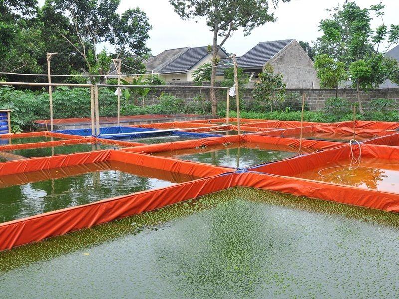 cara membuat kolam ikan sederhana