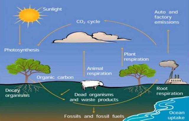 Daur Oksigen : Tahapan, Proses, dan Gambar Ilustrasinya