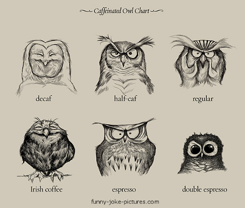 Funny Caffeinated Owl Chart Image