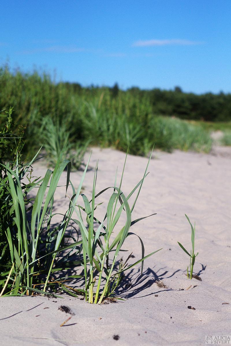 gotland vad ska jag göra i sommar sommarplan sommarplaner att göra i sverige på sommaren sommarlov sommarlovsplaner semester semesterplaner ledig ledighet